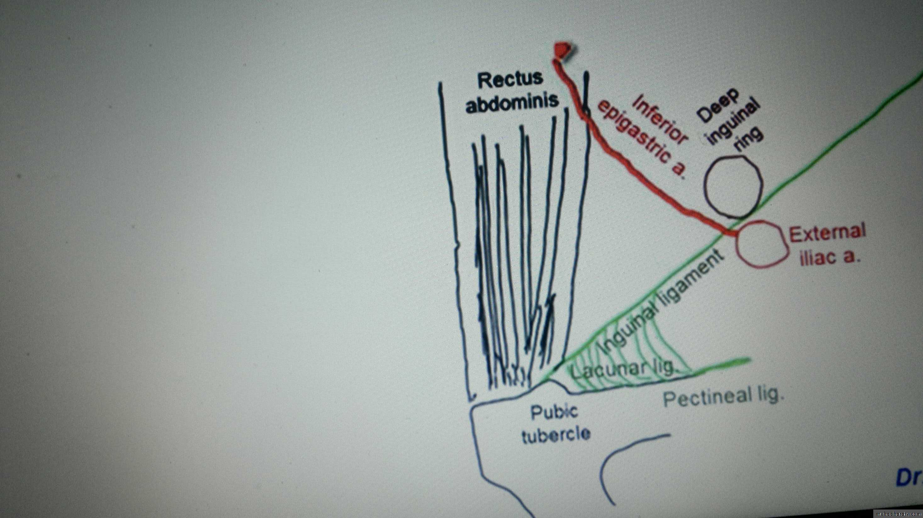 inguinal region anatomy with clinical notes pptx - RuQaYa FaLaH ...