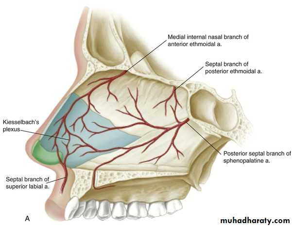 Anatomy And Physiology Of The Nose And Paranasal Sinuses Pptx