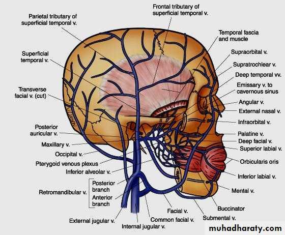 General anatomy pptx - دكتور نجاة نظري - Muhadharaty