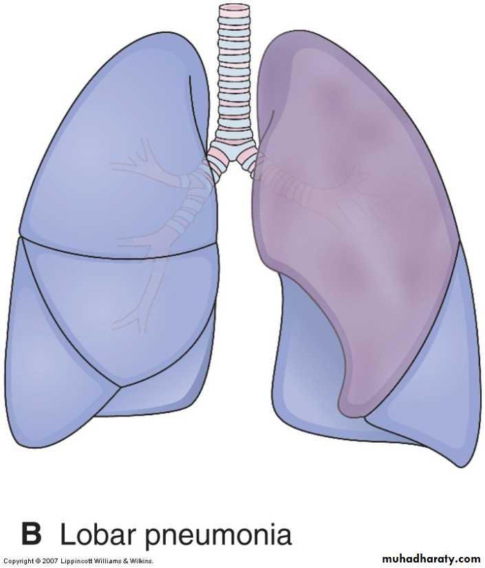 Respiratory System Pptx