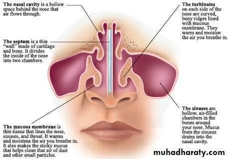 Nasal cavity pptx - دكتور نجاة نظري - Muhadharaty