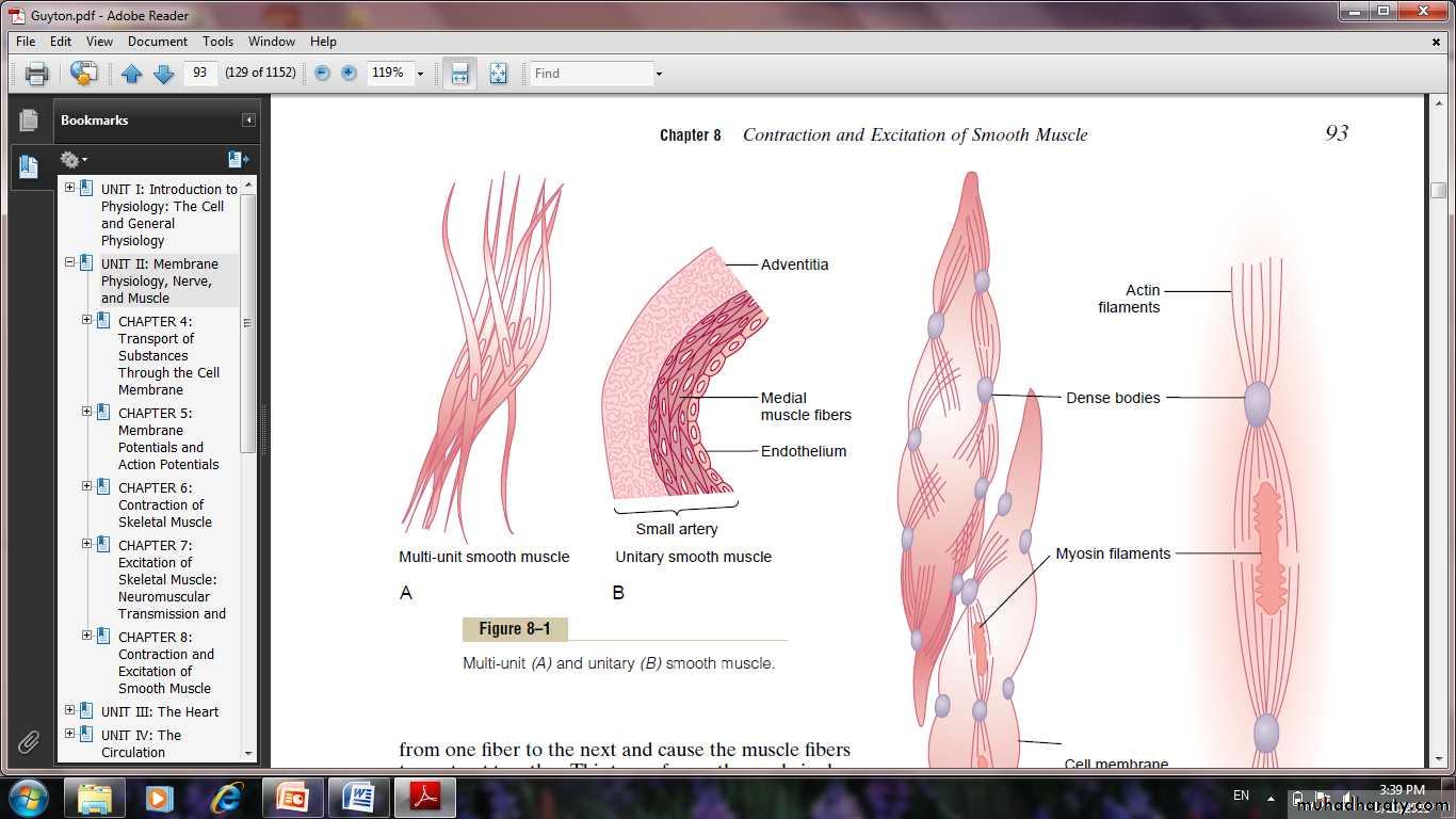 Smooth Muscle Docx Muhadharaty