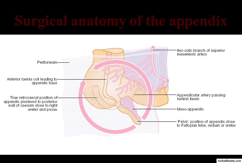 Appendix pptx - د.رباح - Muhadharaty