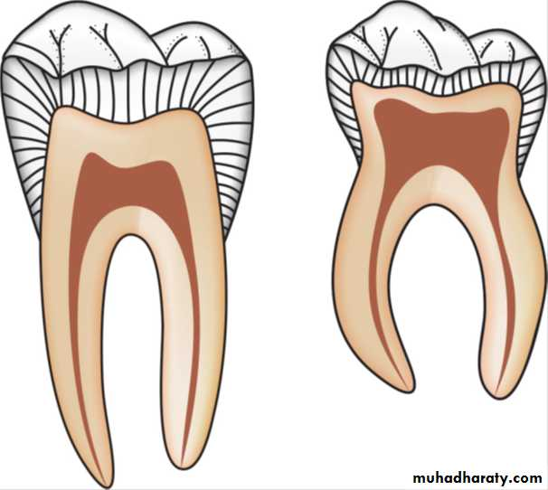 Primary Tooth Pulp Morphology - The Best Tooth 2018