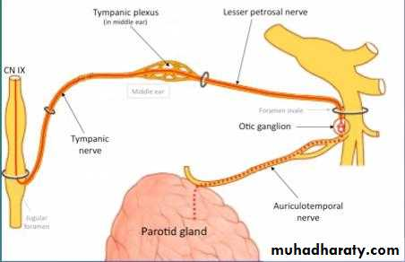 Parotid gland pptx - دكتور سعد - Muhadharaty