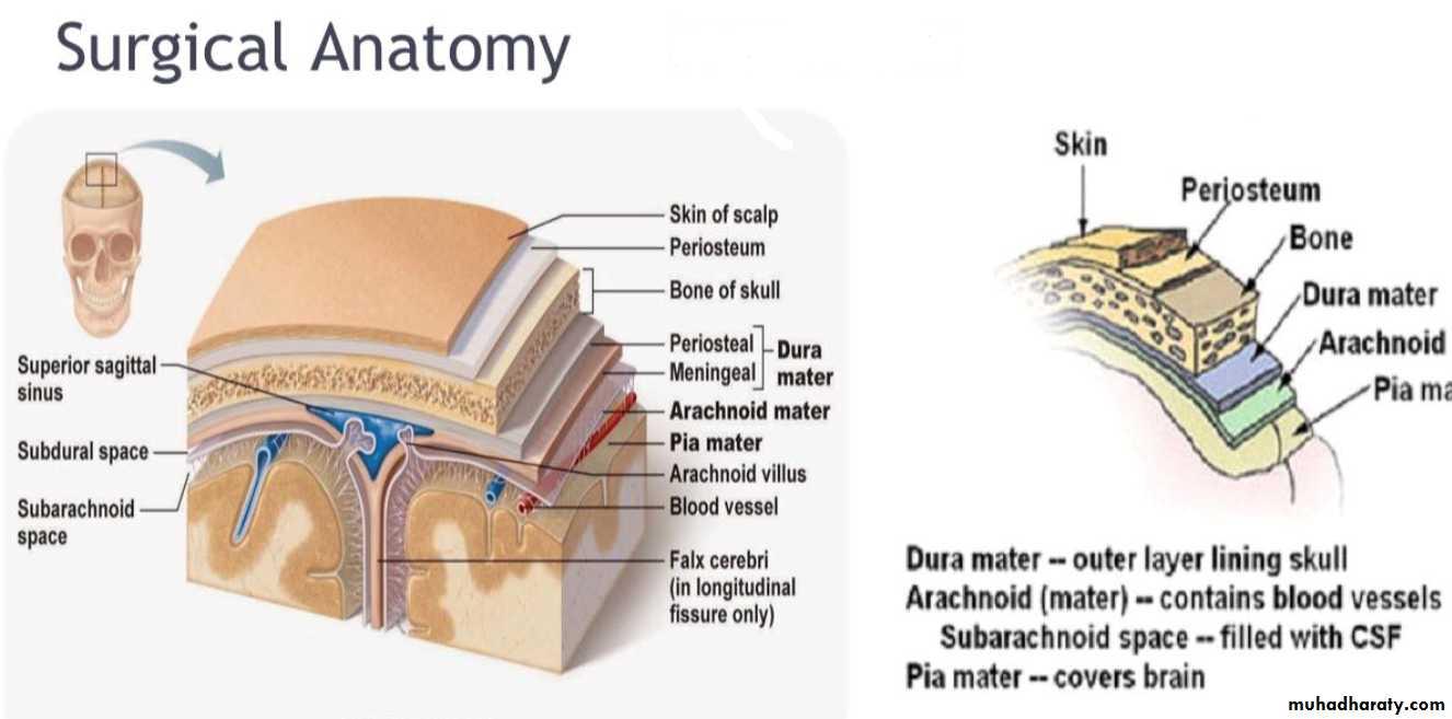 head injury 1
