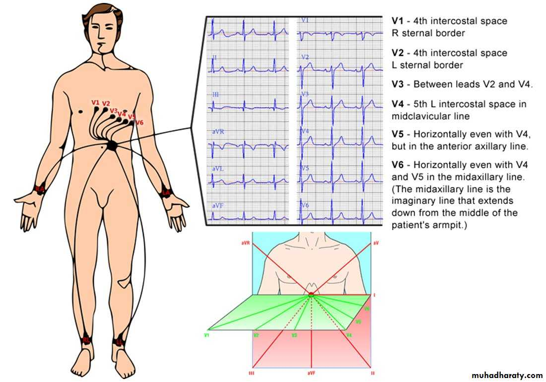 Investigations of cardiovascular system