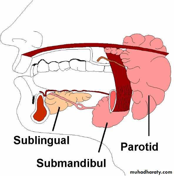 (Xerostomia  (saliva