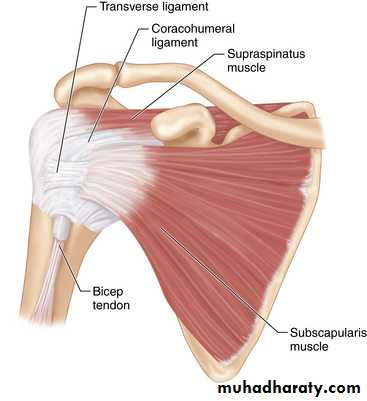Shoulder disorders