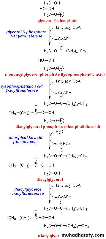 TG Synthesis