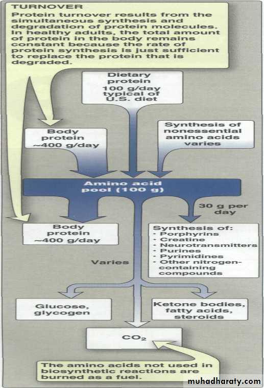 Amino Acid : Disposal of Nitrogen
