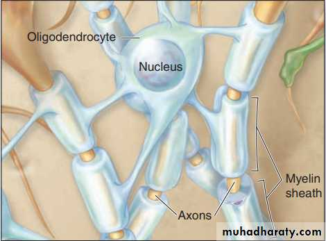 Glial Cells & Neuronal Activity